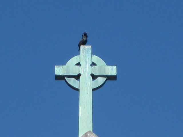 Crow on Cross 4 x 3